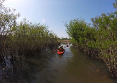 Kayak in the Fucecchio Marshes